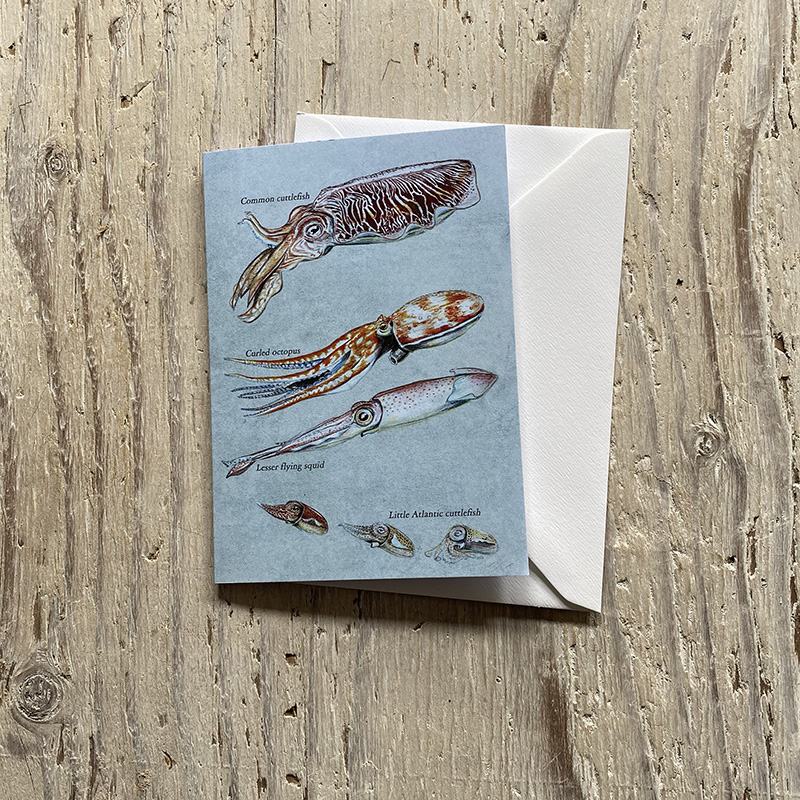 Cephalopods greetings card