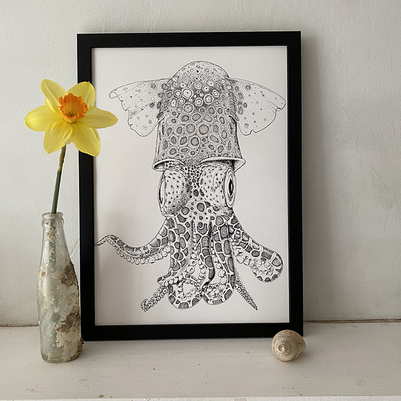 Little Atlantic Cuttlefish Fine Art Print