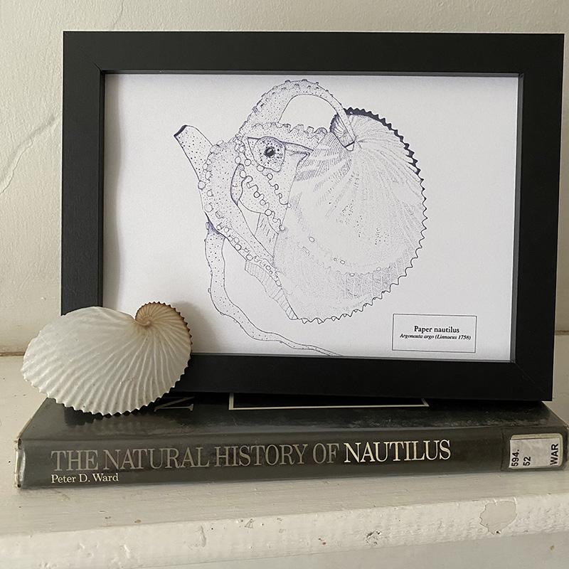 Paper Nautilus Fine Art Print