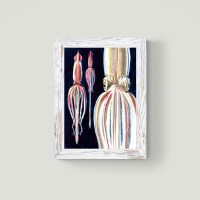 Giant squid limited edition fine art print