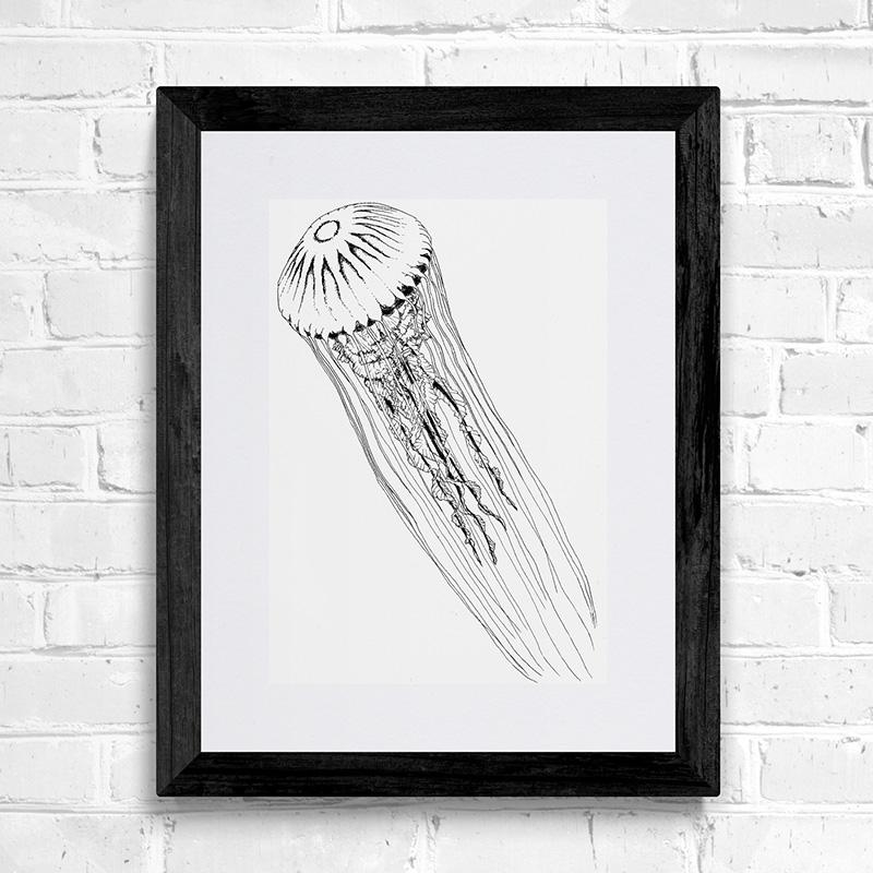 Compass jellyfish fine art print