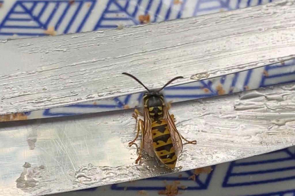 wasps enjoy a good picnic