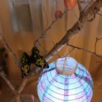 Lantern and butterfly on an Easter tree