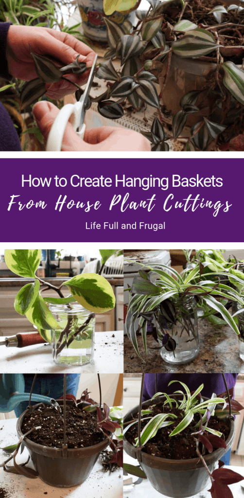 How to Create Hanging Baskets from House plant cuttings life full and frugal pinterest