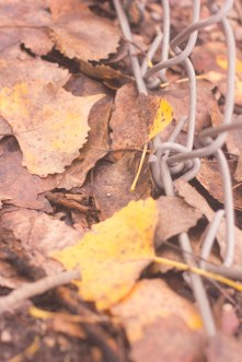 fallen autumn leaves brown and gold macro