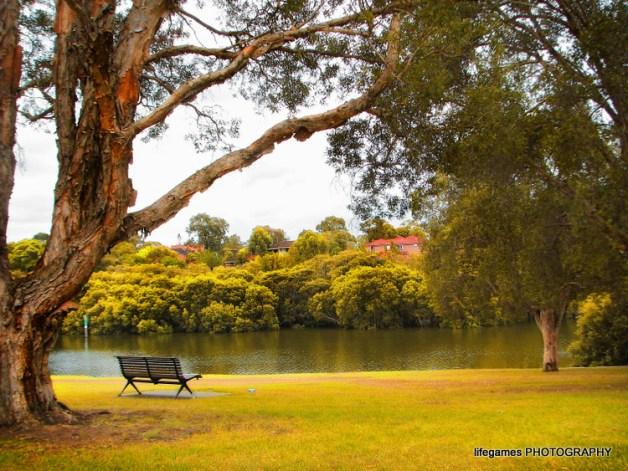 overlooking the paramatta river