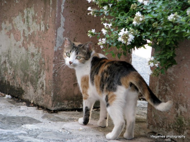 pictures-of-ITALY (46)