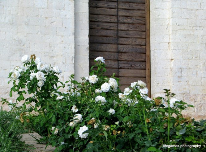 pictures-of-ITALY (75)