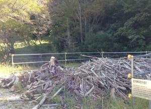流木集積場2
