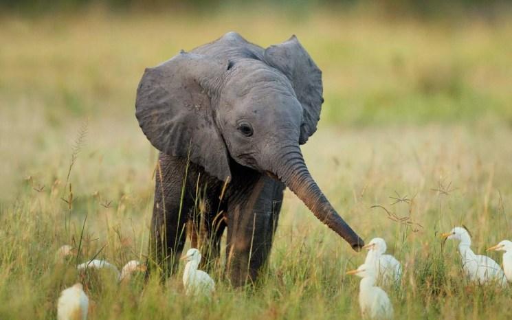 Фишки дня — 22 сентября, слон, слоник, природа, животные, Африка