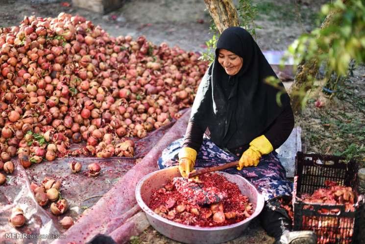 Фишки дня — 26 октября, Азербайджан, гранат, женщина, сбор урожая
