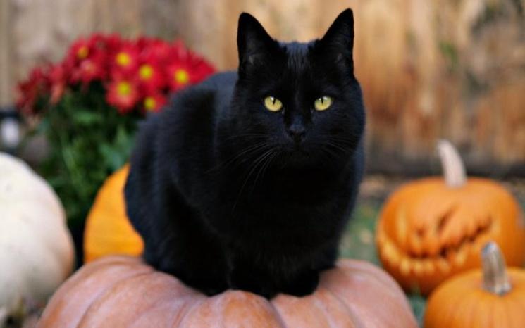 фишки дня, день защиты черных кошек в Италии, черный кот