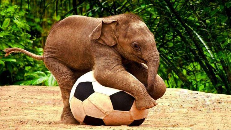 фишки дня, день домашних животных, день слонов