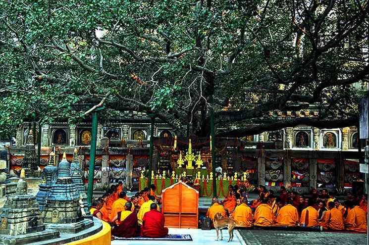 Фишки дня — 8 декабря, дерево бодхи