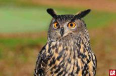 узнай характер по птице