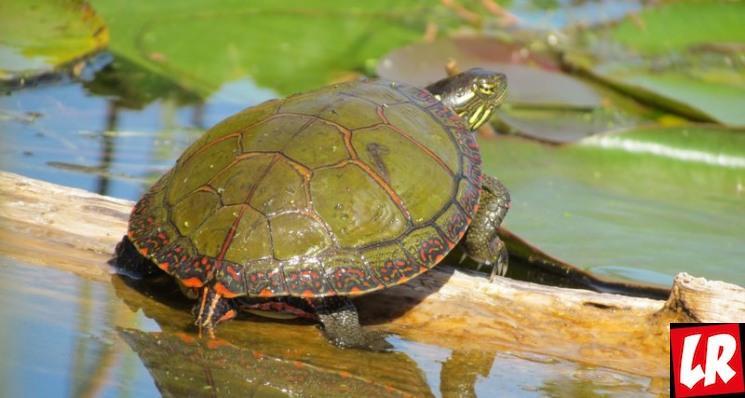 фишки дня - 23 мая, день черепах, черепаха