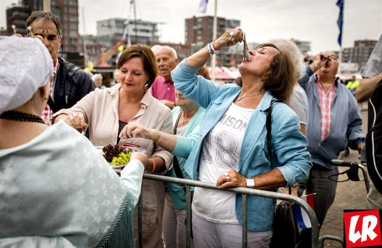 фишки дня - 16 июня, День селедки Нидерланды