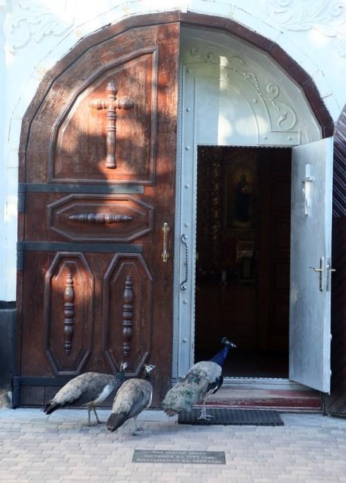 Мгарский монастырь, история Мгарского монастыря, павлины