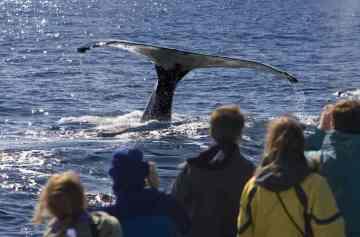 фишки дня, день китов