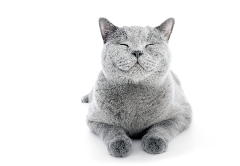 Кошка лечит мурчанием и видит ночью в 7 раз лучше нас
