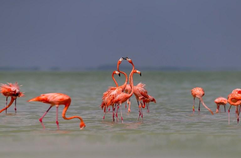 фишки дня, день фламинго