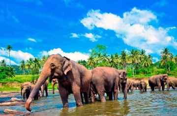 фишки дня, день защиты слонов в зоопарках