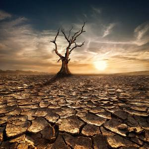 Desert_Background_with_Tree