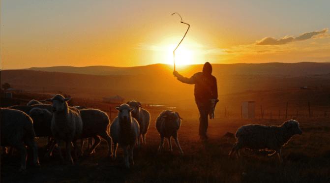 God's People, part 143: Shepherds