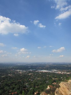 The urban forest of Johannesburg