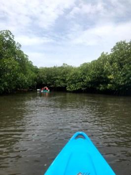 pływanie kajakami wśród mangrowców, Havelock, Andamany, Indie