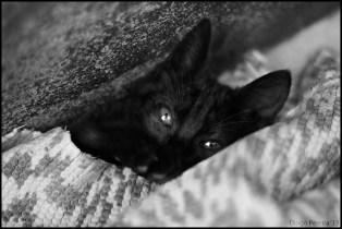 Oh My Cat II
