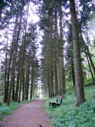 Hiking trail around Herrstein