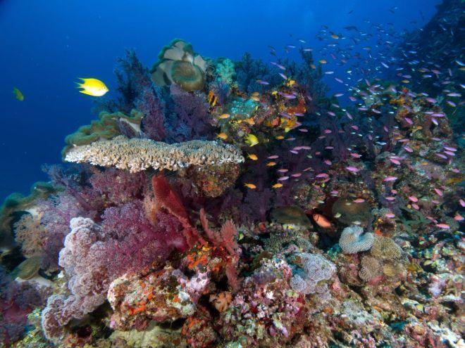 Egzotinė kelionė - nardymas Fidžyje