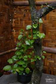 Plant in the corner
