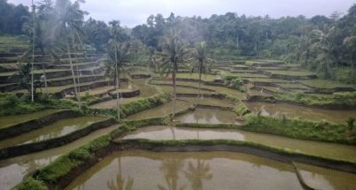 View of rice paddies from Yogyakarta to Bali