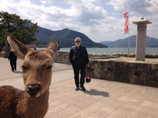 Deer and husband on Miyajima Island, Japan