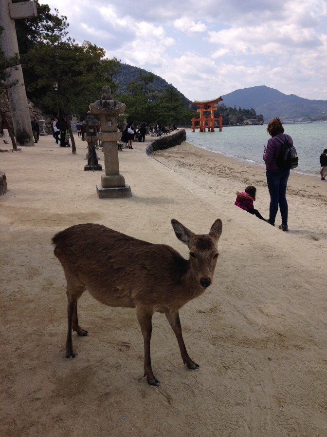 Deer and the tori gate on Miyajima Island, Japan