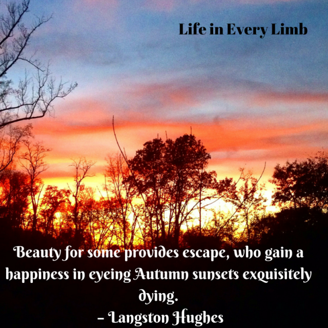 Beauty for some provides escape, who gain a happiness in eyeing Autumn sunsets exquisitely dying. – Langston Hughes