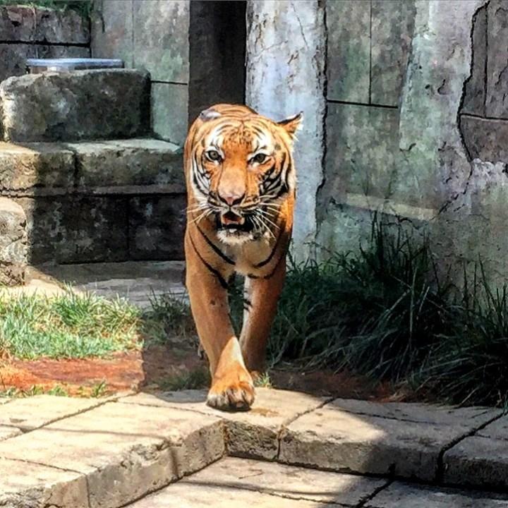 Best of 2017 - zoo