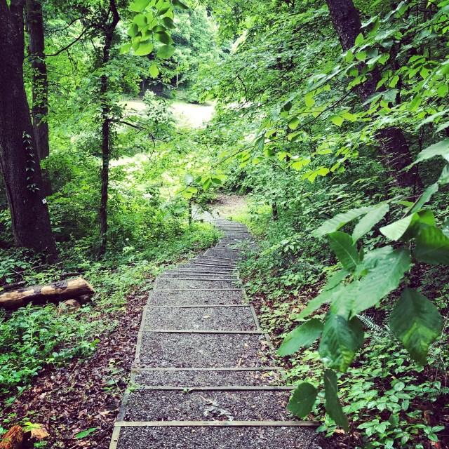 UT Arboretum 2
