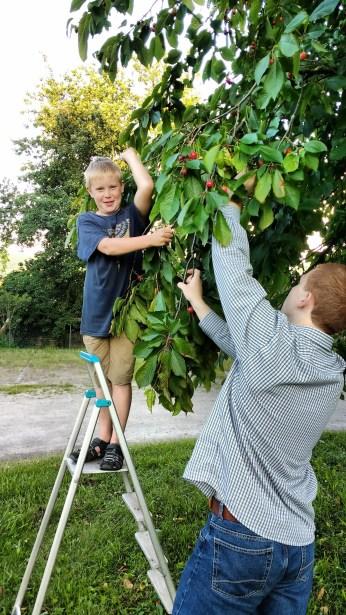 It's a dangerous sport, cherry-picking...