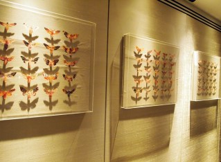 Butterflies, South Place Hotel