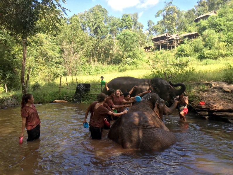 Bath Time, The Karen Elephant Experience at Elephant Nature Park