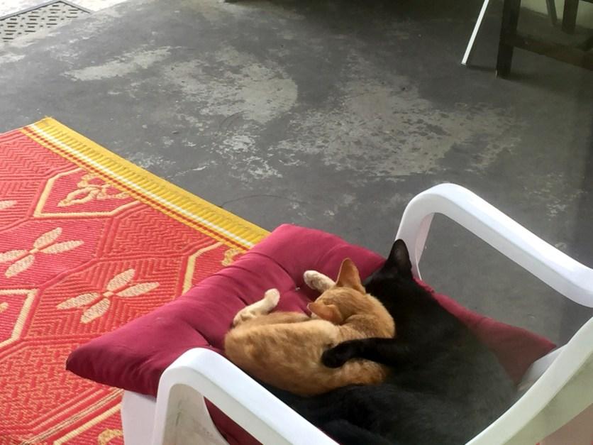 Bovy Cats