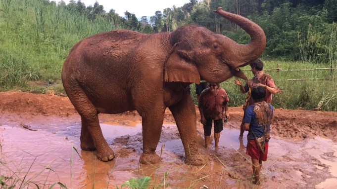 Nature's Spa, The Karen Elephant Experience at Elephant Nature Park, Chiang Mai
