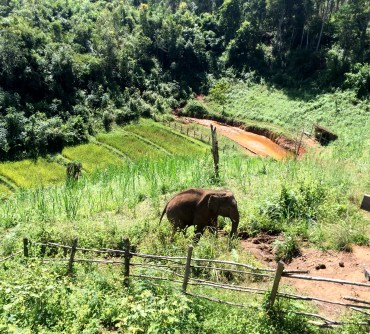 They're Coming, The Karen Elephant Experience at Elephant Nature Park, Chiang Mai