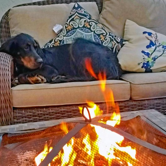 Lexi by the fire 2