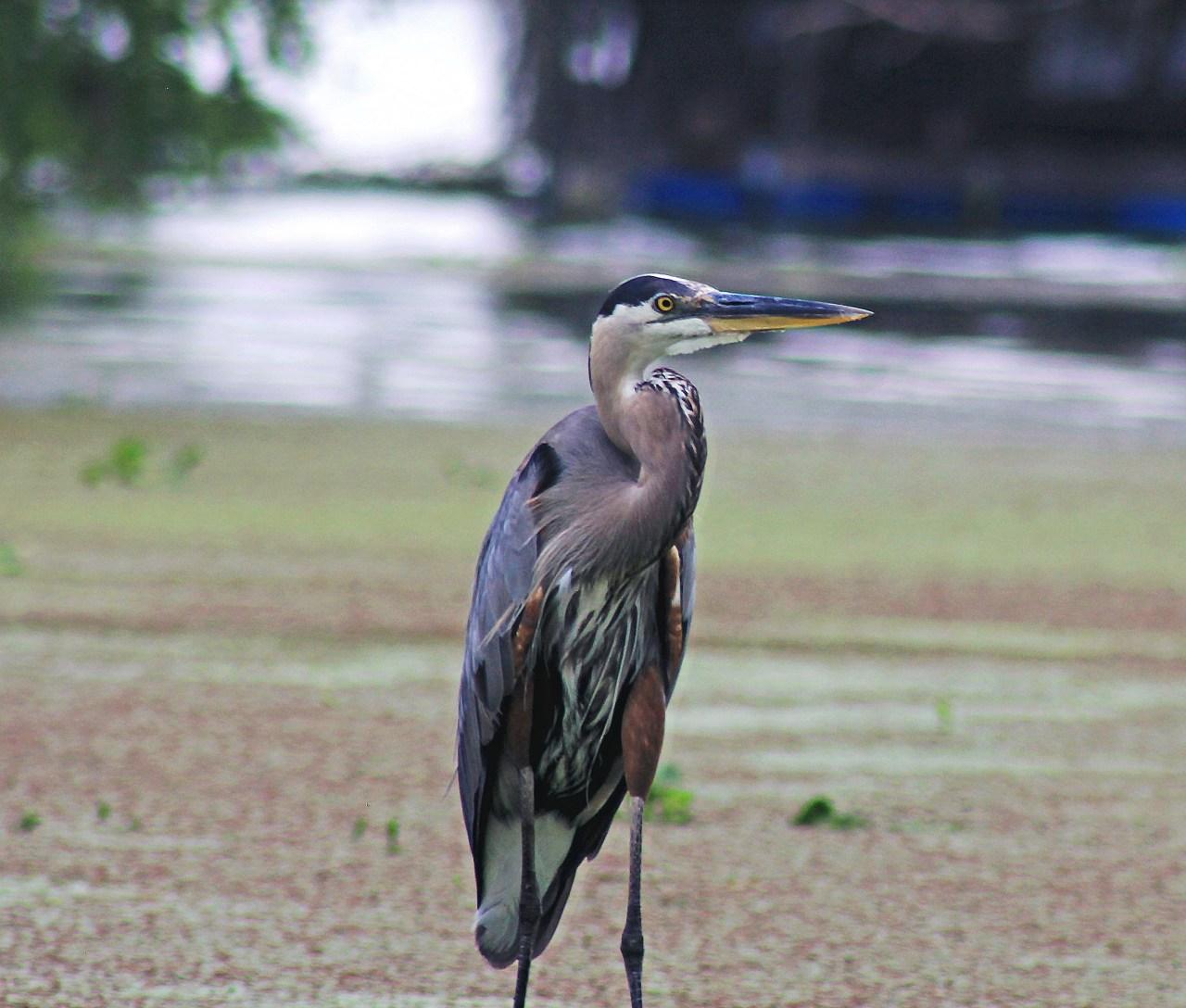 Bluish bird edited