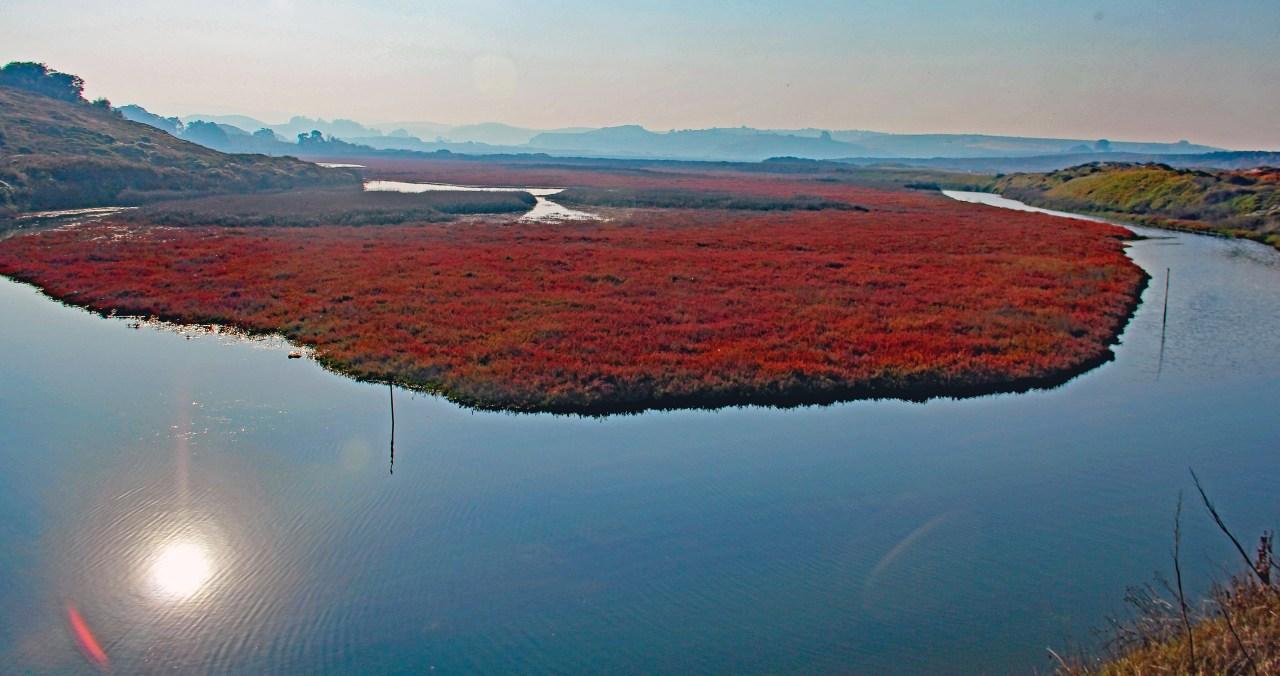 Pescadero Marsh 4