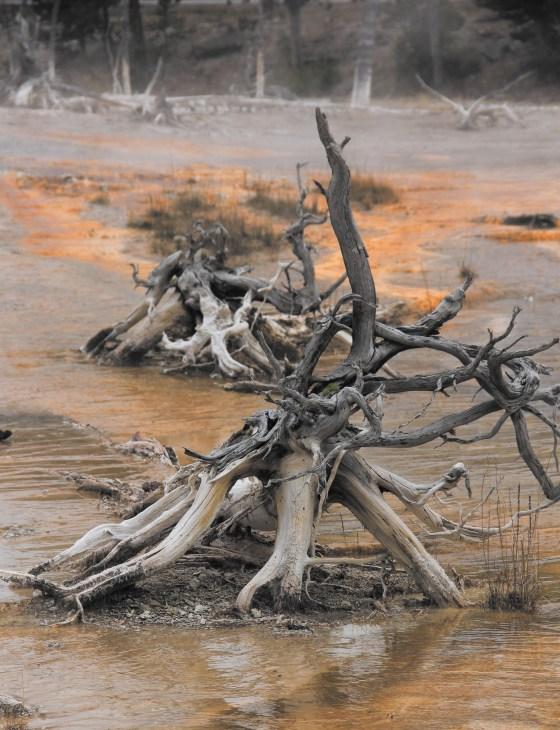 Dead stump